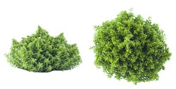 green plant isolated on white background
