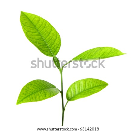 Green plant isolated over white - stock photo