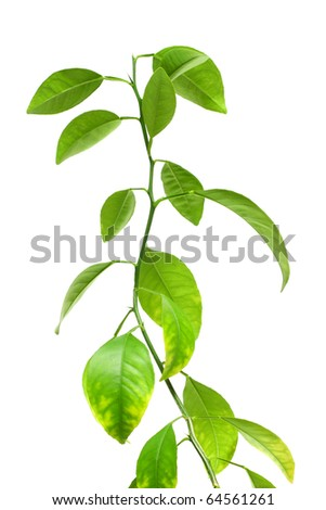 Green plant isolated over white