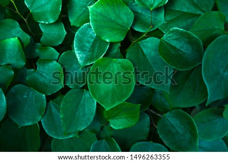 Green plant leaves closeup in summer botanical garden #1496263355