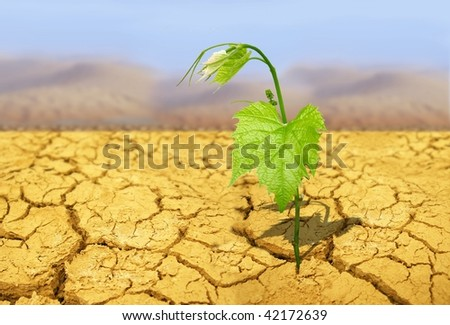 green plant on background of cracked soil