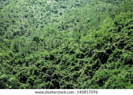 Green plant on Mountain