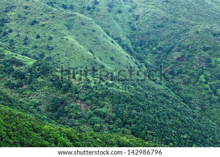 Green plant on Mountain