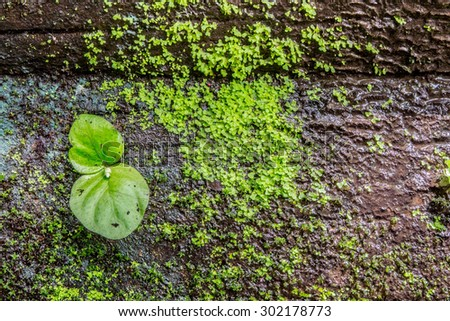 green plant on rock in forest