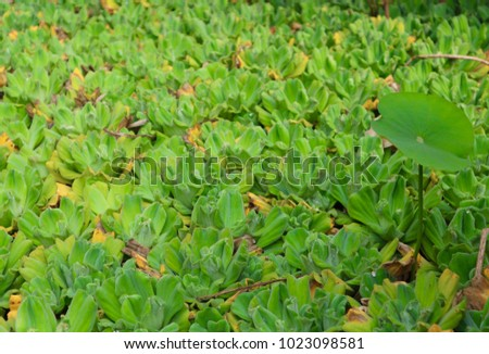 Green plant on the river fresh background #1023098581