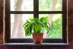 Green plant on the window