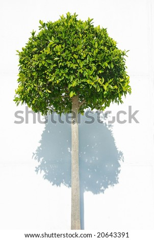 Green plant on white background.