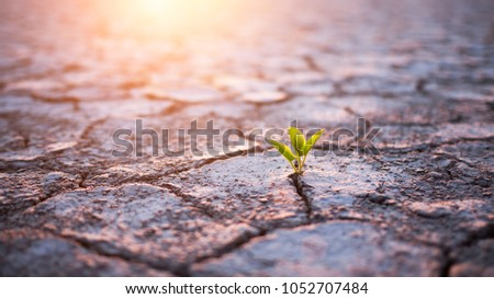 Green plant sprout in desert
