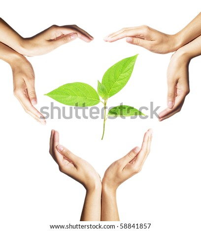 green plant surrounded by hands on white