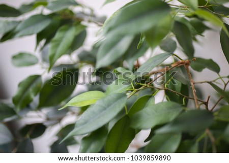Green plant tree on the white background. Eco nature photo at home. Green leaves texture closeup and minimalism. #1039859890