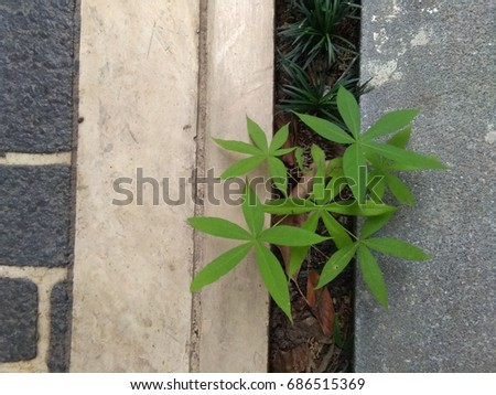 green plant which is survive on the ground #686515369