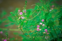 Green plant with sharp thorns and beautiful flowers