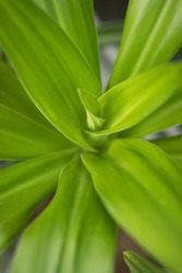 Green plant yukka spring growing nature background texture vertical