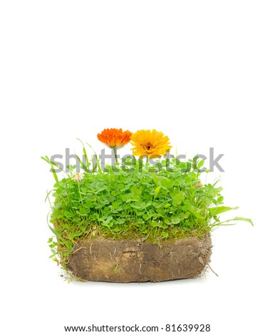 Green Plants and Calendula Flowers in Soil Isolated on White Background