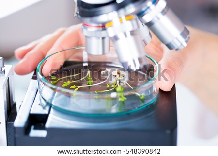 Green plants and scientific equipment in biology laborotary