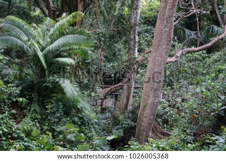 Green plants and trees in Bali jungle Indonesia