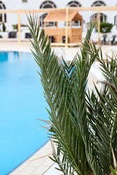 Green plants are on foreground with calm water of an empty swimming pool of hotel area, cancelled resort season
