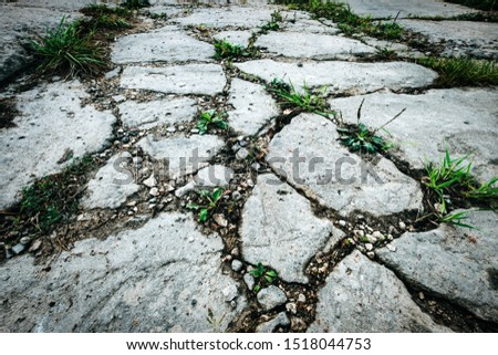Green plants growing out of cracks in the earth. Drought and climat change concept