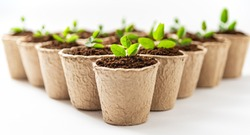 Green plants in fiber pots on white background. Ecologic biodegradable material concept.