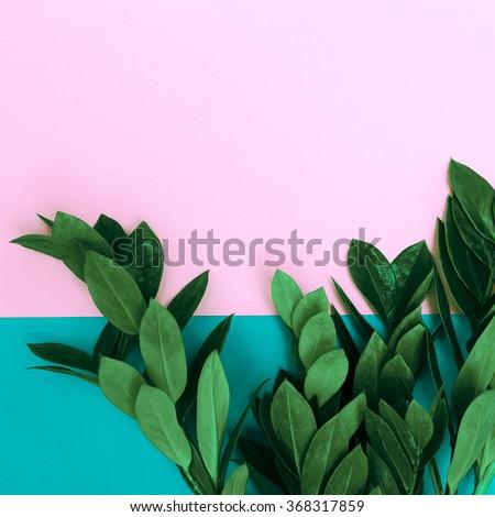 Green Plants on stylish background. Minimalist fashion #368317859