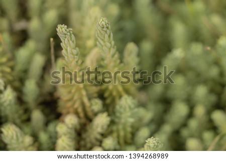 Green plants. Selective focus. Cactus. #1394268989