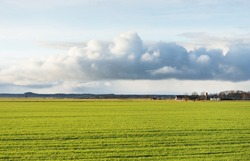 Green plowed agricultural field on a clear spring day. Puddle, lonely trees, village in the background. Dramatic sky, glowing ornamental cumulus clouds, soft sunlight. Idyllic landscape, rural scene