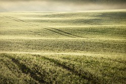 Green plowed agricultural field with tractor tracks at sunrise, close-up. Golden light, fog, haze. Picturesque autumn landscape. Rural scene. Abstract natural pattern, texture, background, wallpaper