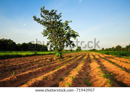 green potato field and blue sky landscape