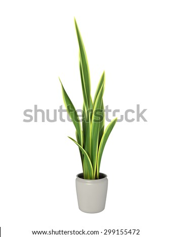 green potted plant isolated on white background. - Shutterstock ID 299155472