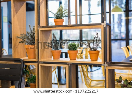 Green potted plants in beautiful pot outdoor #1197222217
