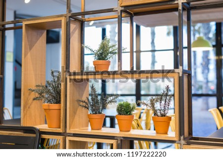 Green potted plants in beautiful pot outdoor #1197222220