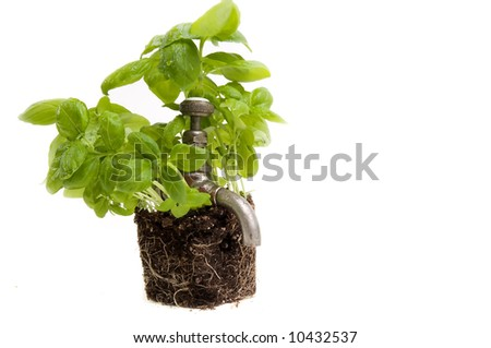 Green power source from herbs and earth