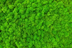green preserved moss for decor in the office on the wall