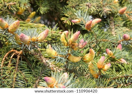 green prickly branches of a fur-tree or pine tree