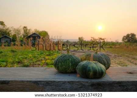 green pumpkins on wooden table beside agriculture garden in the evening sunset.  #1321374923