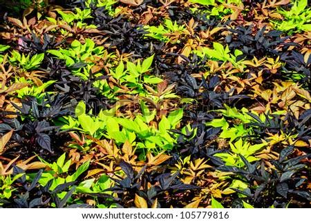 Green purple and orange plants makes fine background