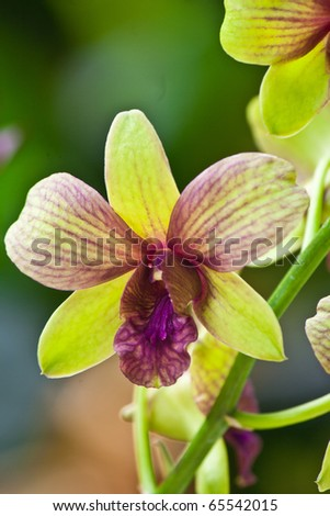 green purple orchid in the garden