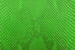 Green python snake skin texture background.
