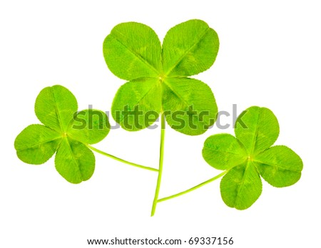 Green quarter-foils, symbols of a St Patrick day on a white background