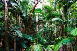 Green rainforest perfect for meditation and yoga