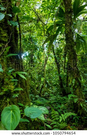 Green rainforest texture. Full frame trees and leaves in tropical rainforest  #1050794654