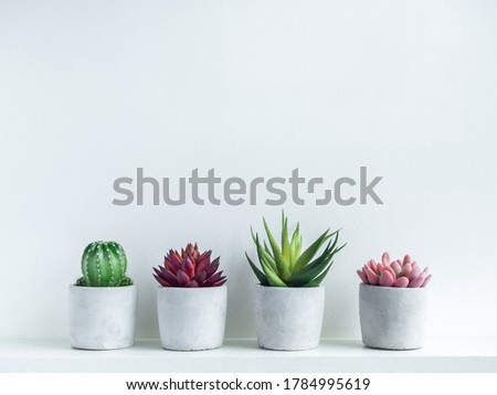 Green, red and pink succulent plants and green cactus in modern geometric cement planters on white wood shelf on white background with copy space. Concrete pots, round shape.
