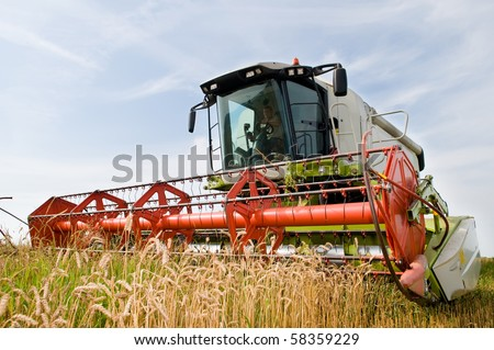 green red working harvesting combine in the field of wheat