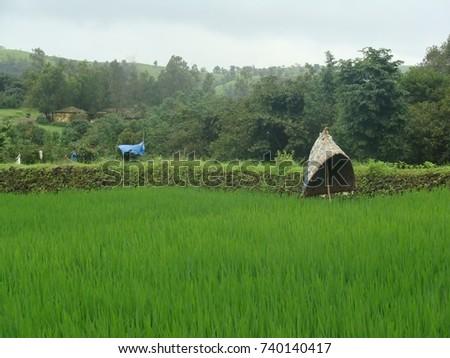 Green Rice Farm #740140417