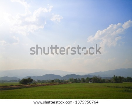 Green rice field, green grass blue sky cloud cloudy landscape background #1375950764