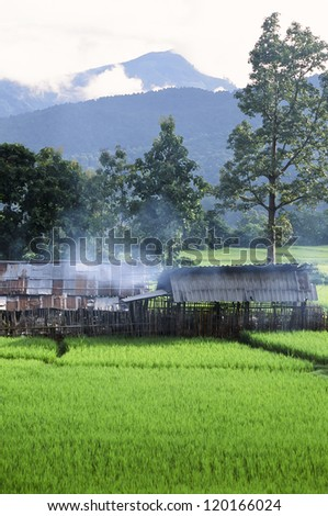 Green Rice Field in Naan province, Thailand