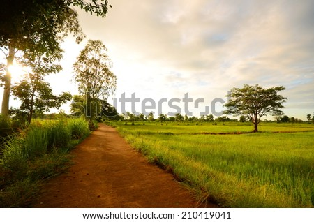 Green Rice Fields and Country Road at Morning Sunrise #210419041