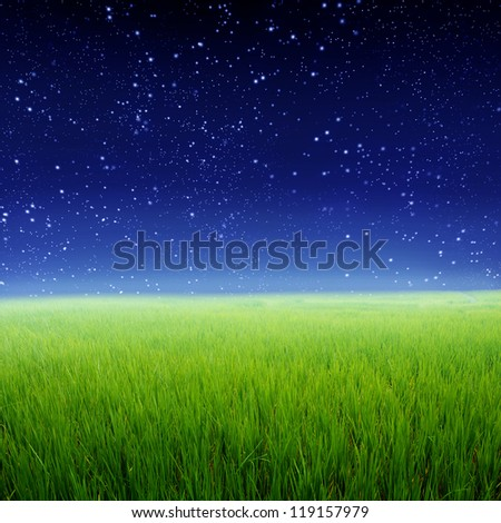 Green rice fields and Star night