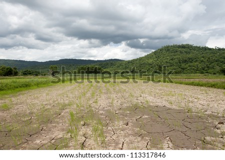 Green rice fields Background