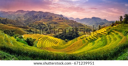 Green Rice fields on Terraced in Muchangchai, Vietnam Rice fields prepare the harvest at Northwest Vietnam.Vietnam landscapes. ストックフォト ©